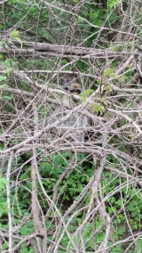 Monkey hiding in the branches